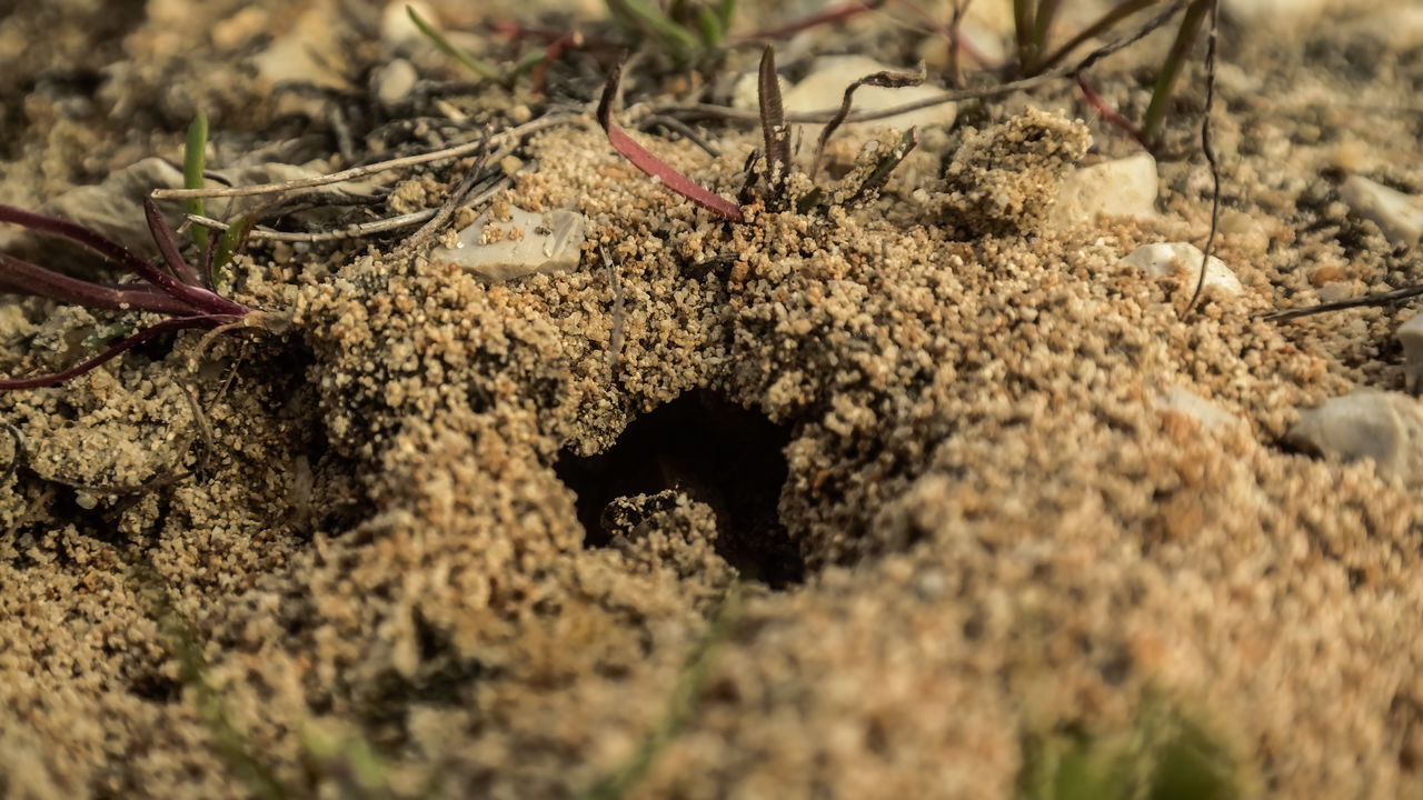 Close-Up Of Hole In Sand