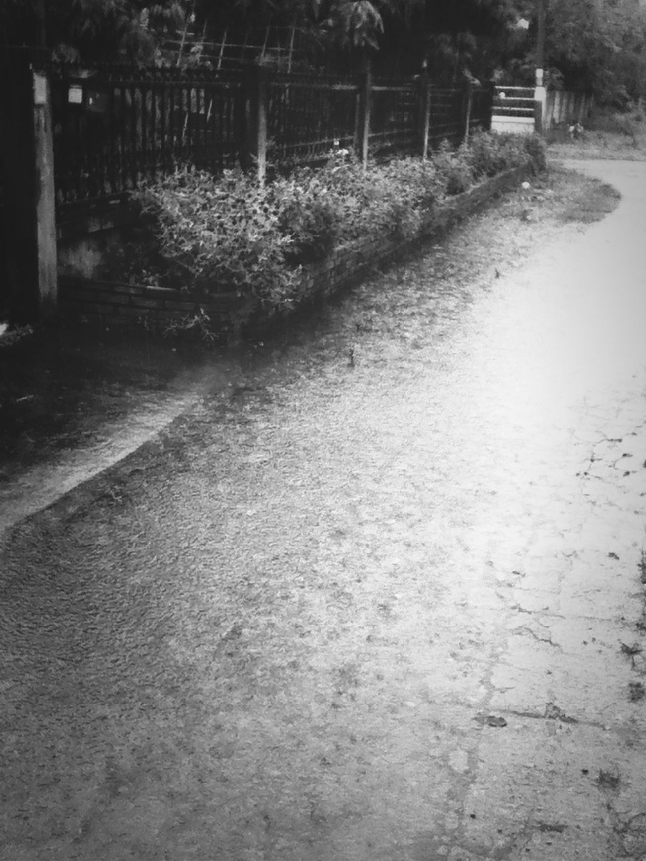 Raining Goodmorning Chiang Mai | Thailand Black And White