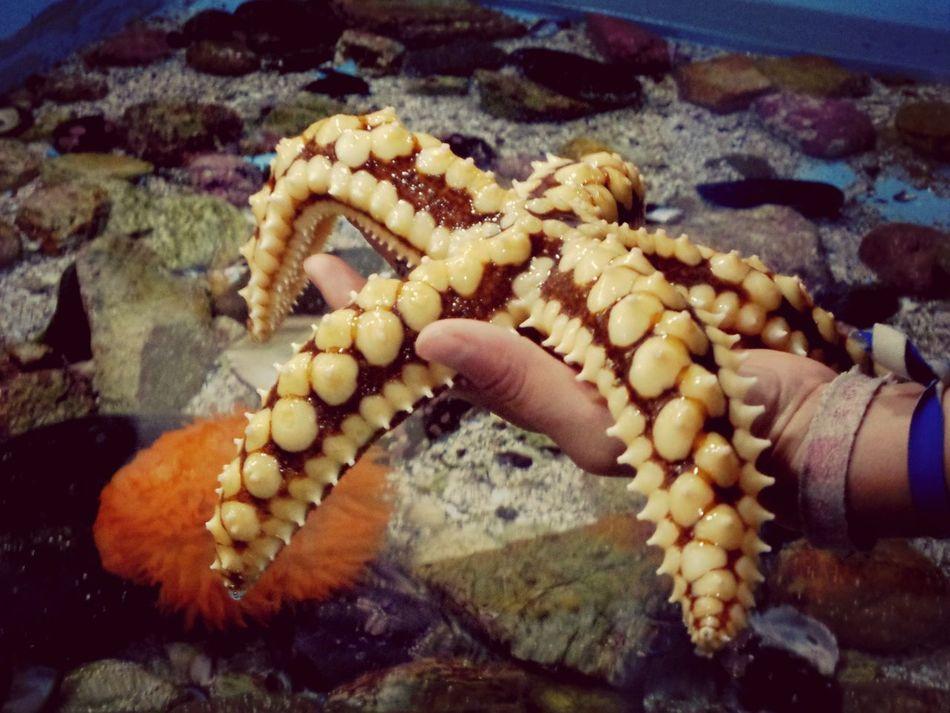 Beautiful stock photos of starfish, Animal, Animal Themes, Animals In The Wild, Chile
