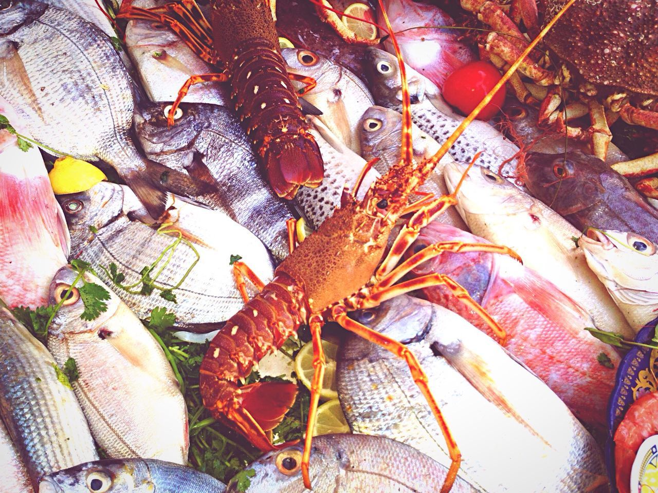 Beautiful stock photos of lobster, Backgrounds, Choice, Crab - Seafood, Day