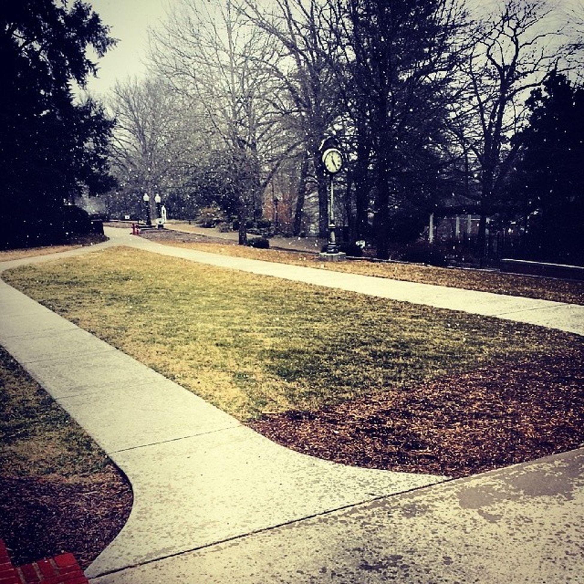 Sau Snowpacalypse part 2?! Saumemories Flurry snow snowing