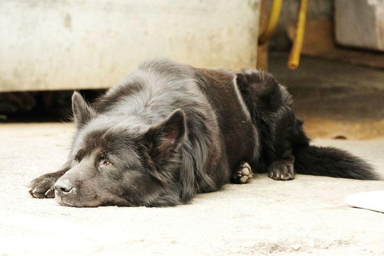 Dog Animal lonely Pet First Eyeem Photo Taiwan Kaohsiung Dog Love Military Village