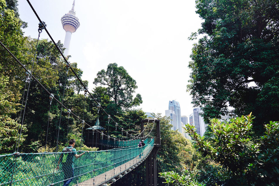 Adapted To The City Architecture Built Structure Canopy Walk City Park Footbridge Forest In The City Growth Nature Suspension Bridge The Secret Spaces The Way Forward Travel Destinations Tree