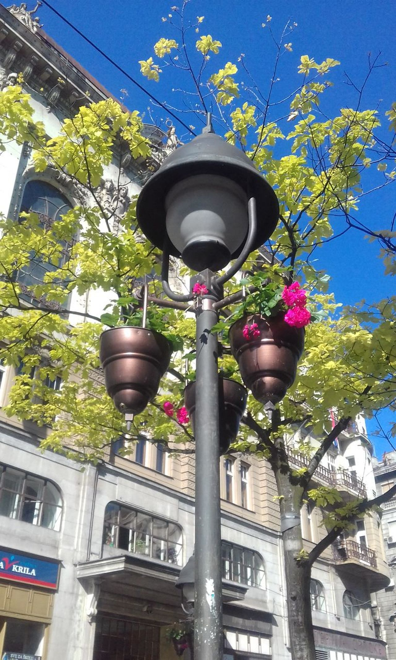 Architecture Blue Blue Sky Building Exterior Built Structure City Clear Sky Day Flourishing Flourishing Belgrade Flower Growth Low Angle View Nature No People Outdoors Romantic Photo Sky Spring Colors Spring Scents Springtime Street Light Streetlamp With Flowers Tree Urban Beauty