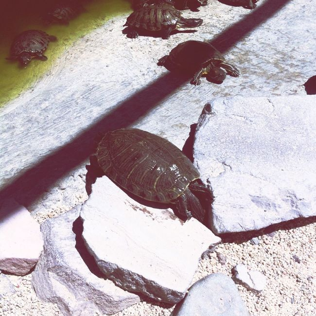 Turtle Fight For A Cause HungryGames