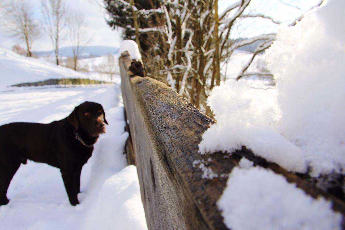 Winter Snow Photography Eiko Dog