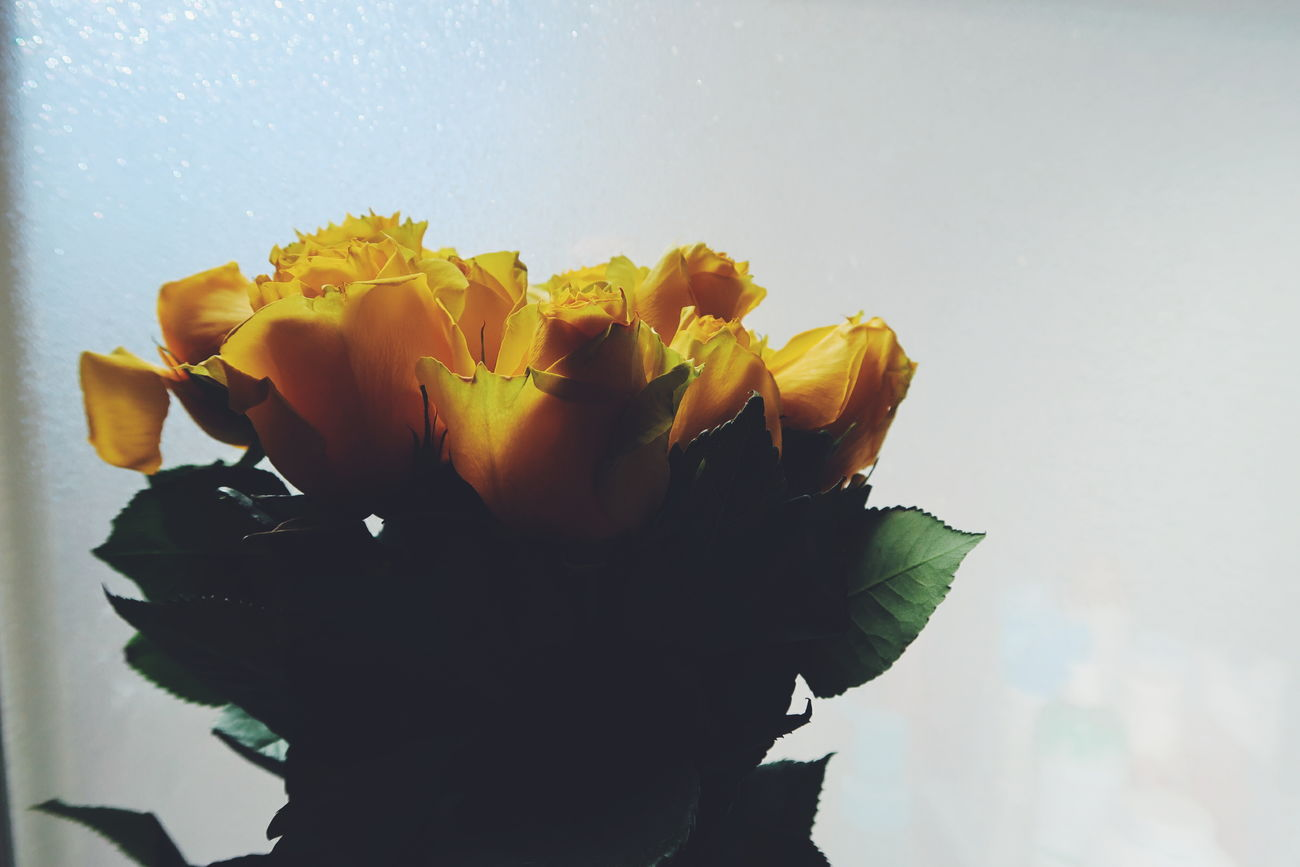 Flower Fragility Petal Nature Beauty In Nature Flower Head Plant Abstract Growth Freshness Yellow Close-up Day No People Iris - Plant Outdoors Sky Yellow Roses Yellow Rose Yellow Flowers Nature