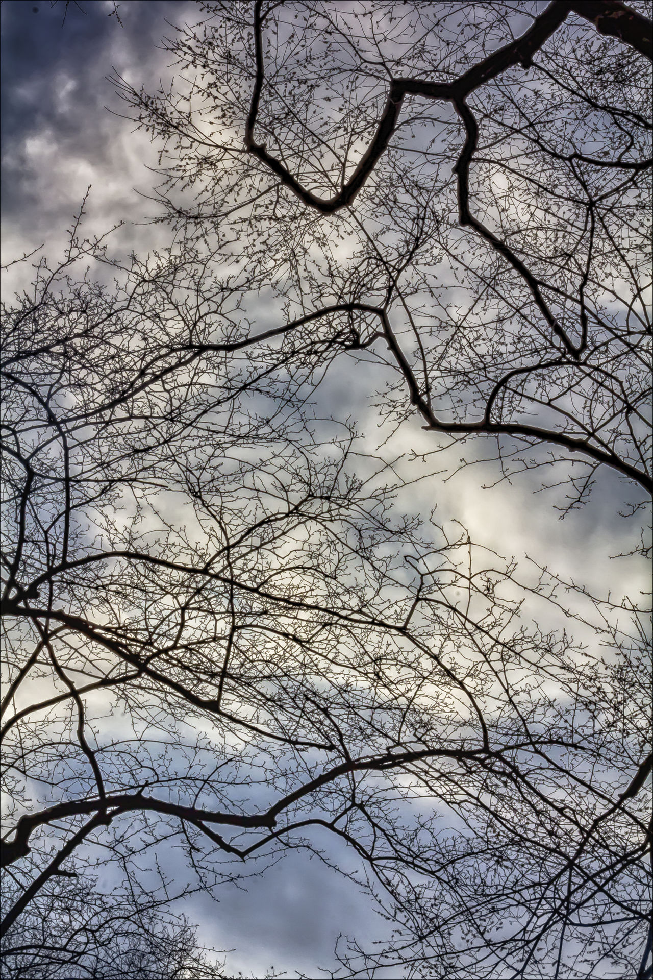 Trees Sky and Clouds Branches Cloud - Sky Clouds Nature Outdoors Trees Trees And Sky