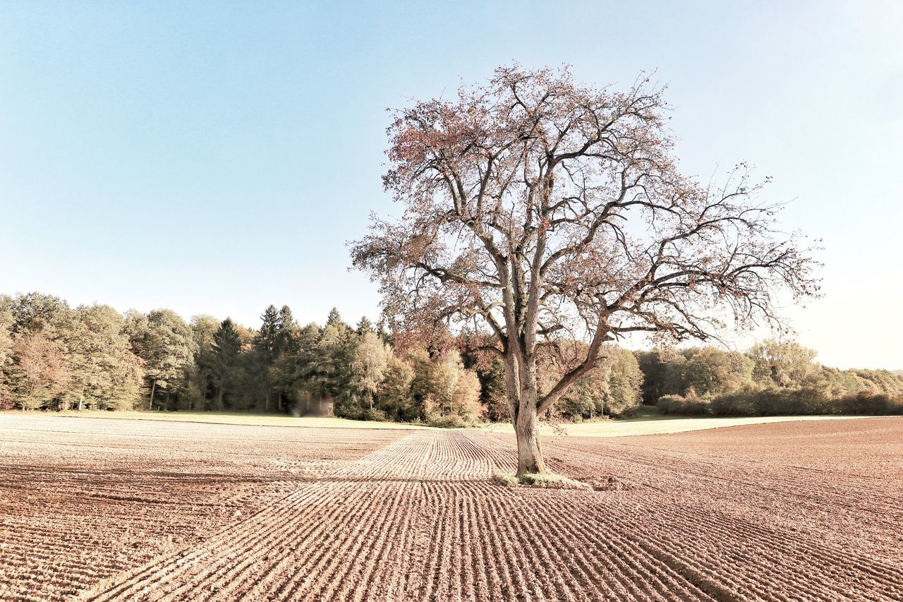 tree, landscape, bare tree, clear sky, tranquility, nature, outdoors, beauty in nature, day, lone, no people, sky