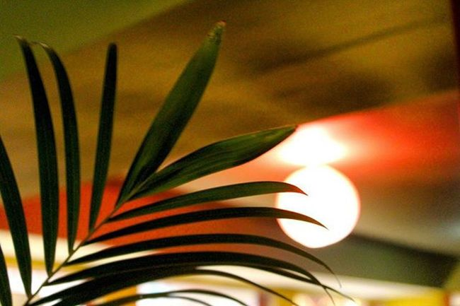 Zen mode active.. Leaves Lamp Colours Nature Instanature Nashik India Taichi inner Peace Picoftheday