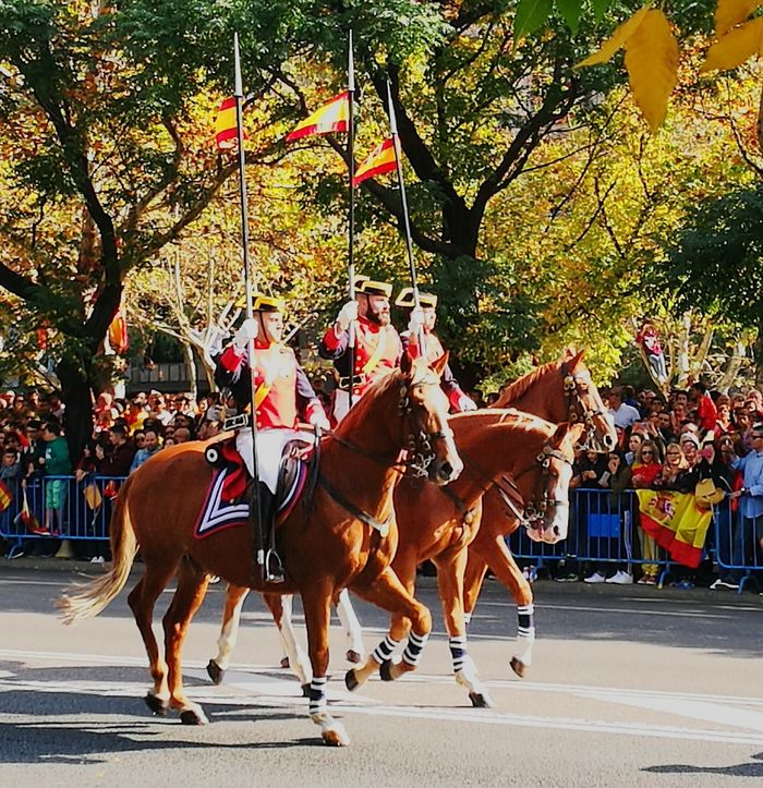 Horse Tree Outdoors People Hispanic Day Spain♥ Madrid