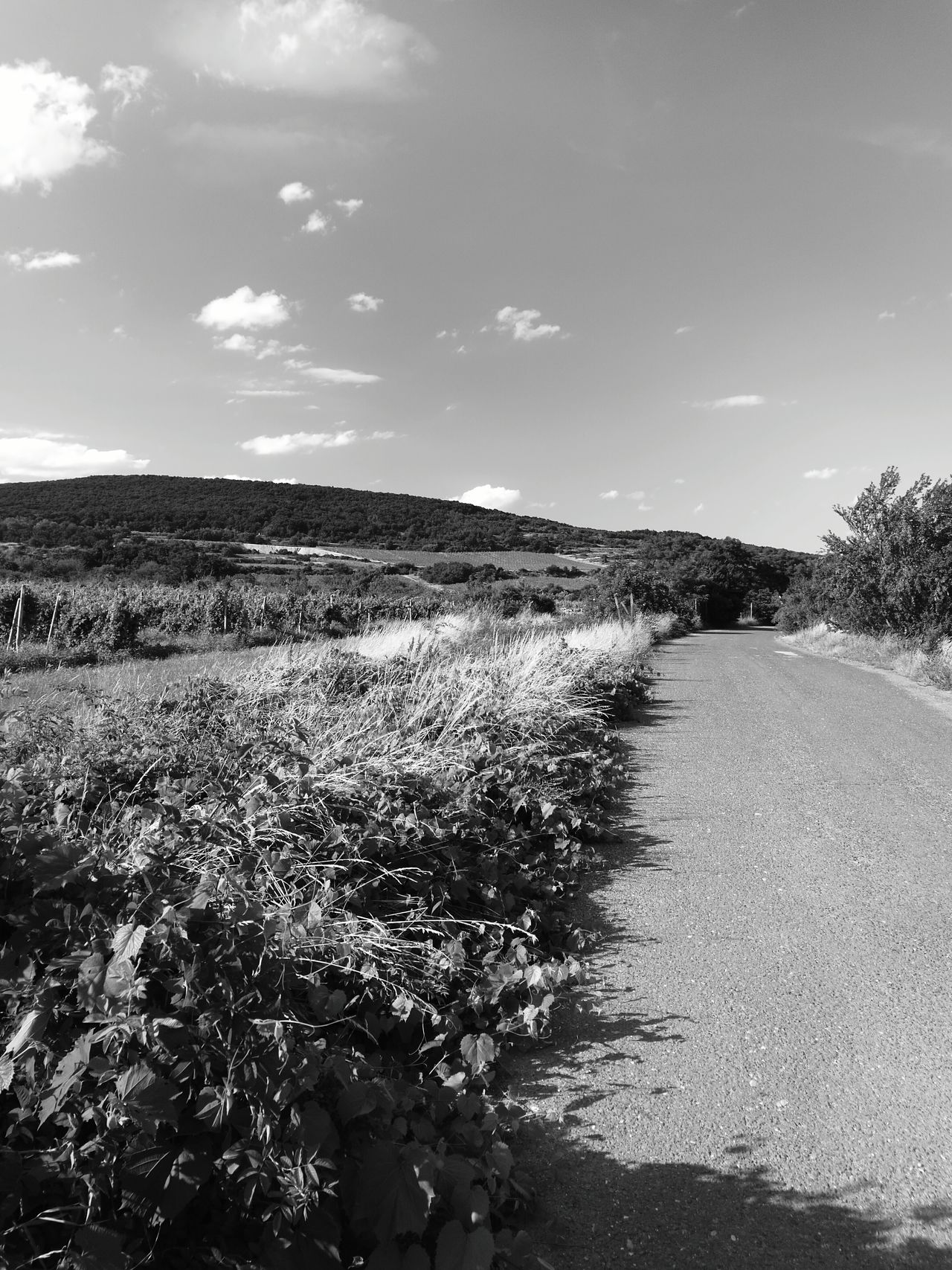 Wine Yards Hills Road Landscapes Landscape Outdoor Photography Outdoors No People Blackandwhite Photography Black And White Huaweip9monochrome HuaweiP9 Monochrome Photography