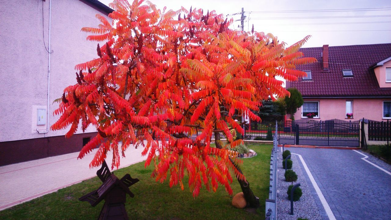 tree, building exterior, architecture, outdoors, autumn, day, built structure, no people, growth, nature, beauty in nature, flower, grass, city, sky, close-up, freshness