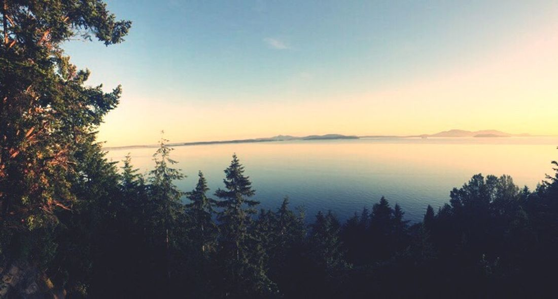 Chuckanut drive Chuckanut Tree Nature Tranquility Beauty In Nature Tranquil Scene Silhouette Heights Sunset Sky No People Growth Outdoors Water Clear Sky Mountain Scenery Day