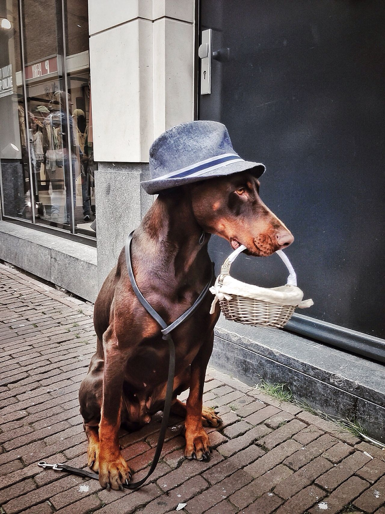 Beautiful stock photos of hat, Animal Themes, Architecture, Basket, Building Exterior