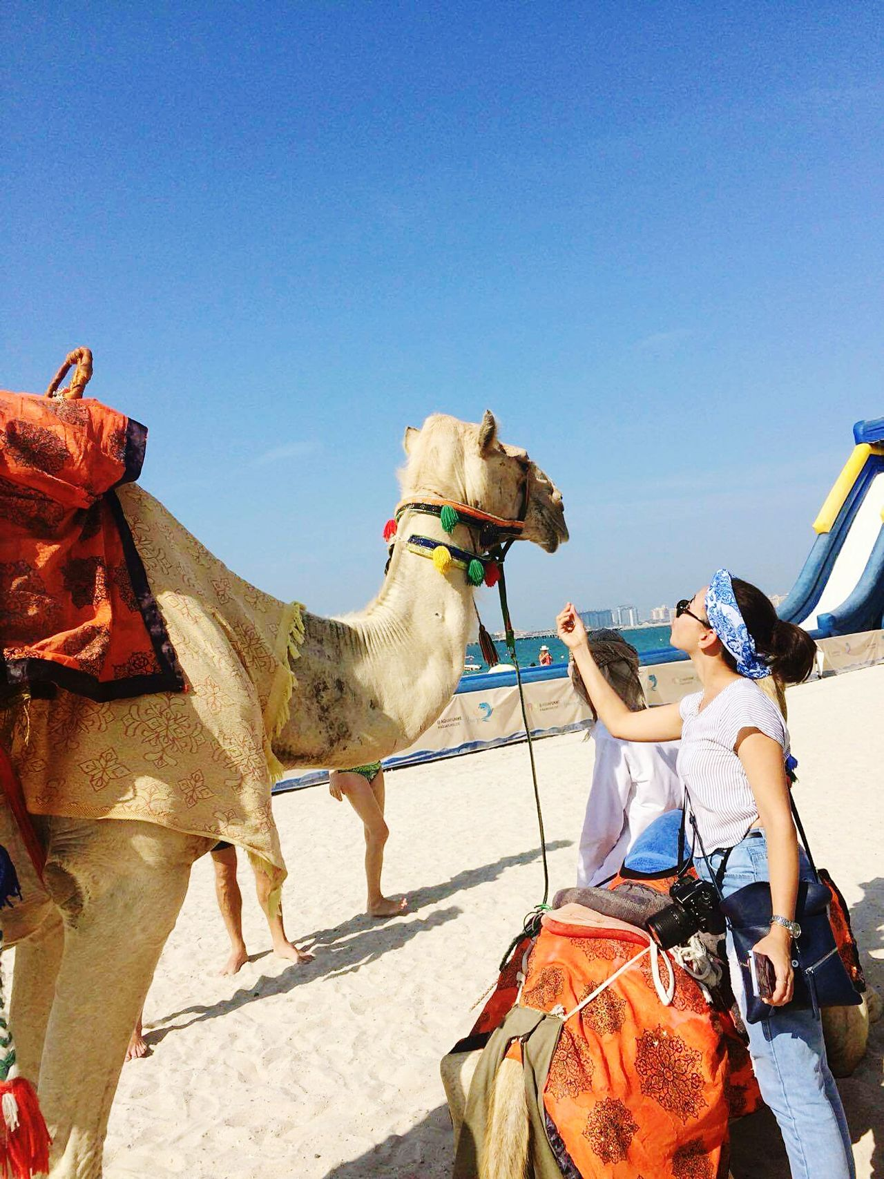One Animal Camel Travel Adults Only Working Animal Only Women One Woman Only Sky Hanging Out Relaxing Nature Lonely Taking Photos Fantastic Exhibition Have A Nice Day♥ Holiday Adventure Beach Day Beautiful Surroundings Hello World That's Me Background Day Out Enjoying The Sun Beach