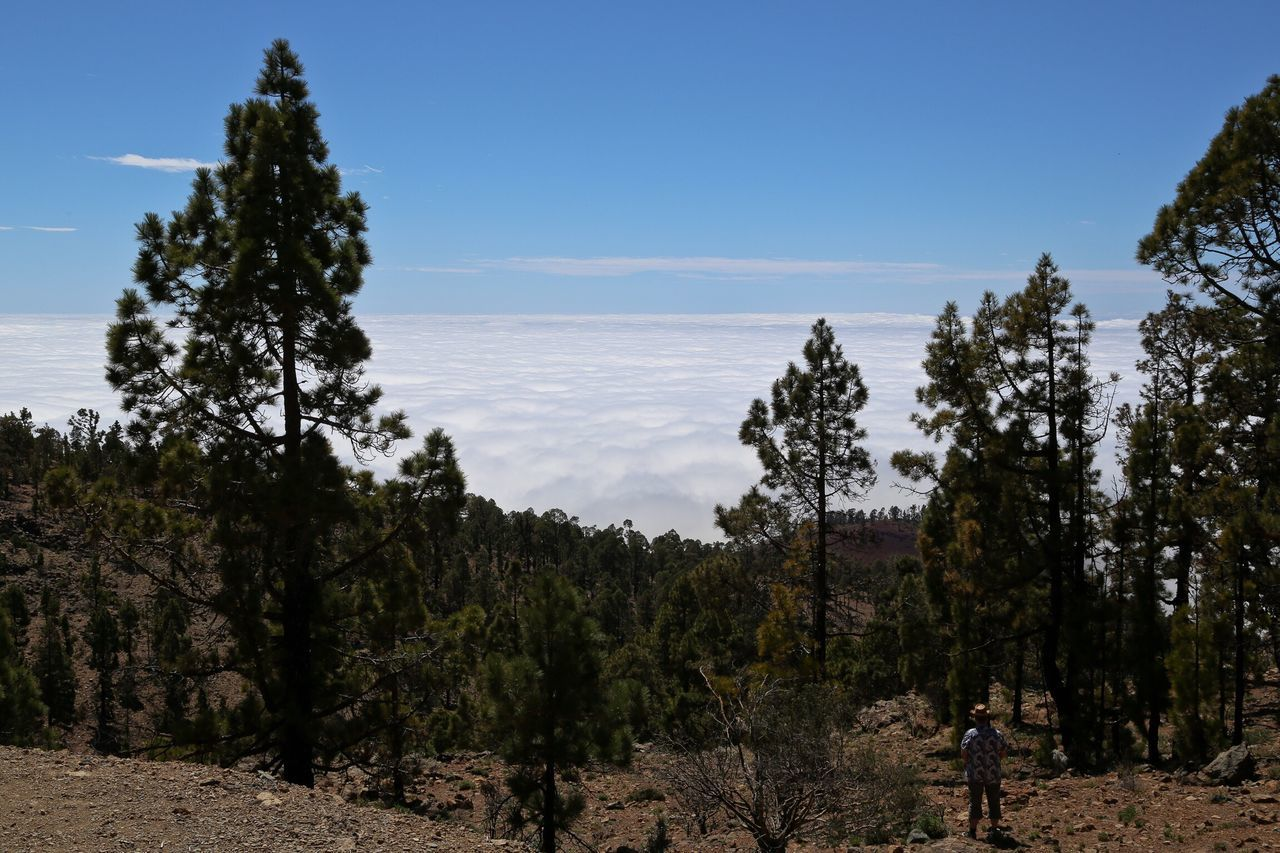 Tenerife Nature People Landscape Clouds And Sky Cloud Forest
