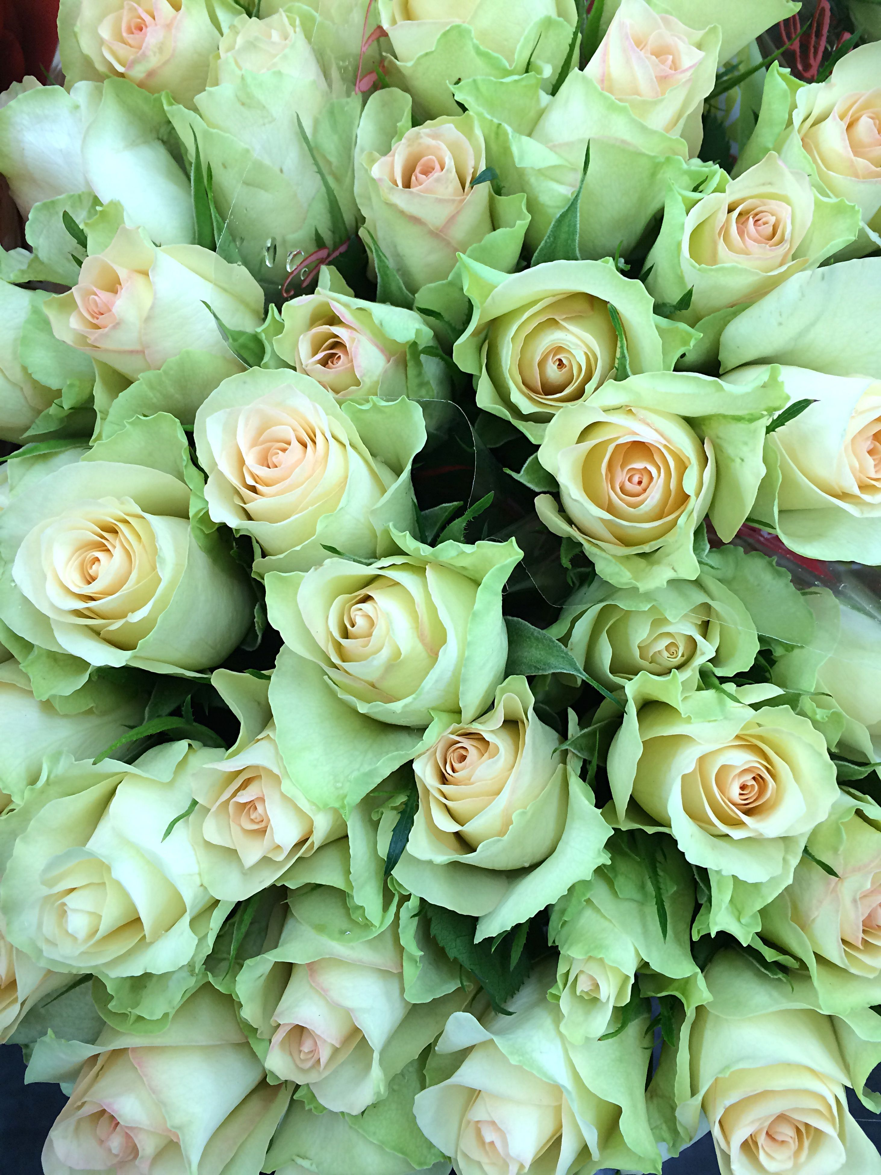 flower, freshness, fragility, petal, flower head, beauty in nature, bunch of flowers, bouquet, rose - flower, full frame, growth, nature, backgrounds, abundance, high angle view, blooming, blossom, rose, indoors, flower arrangement