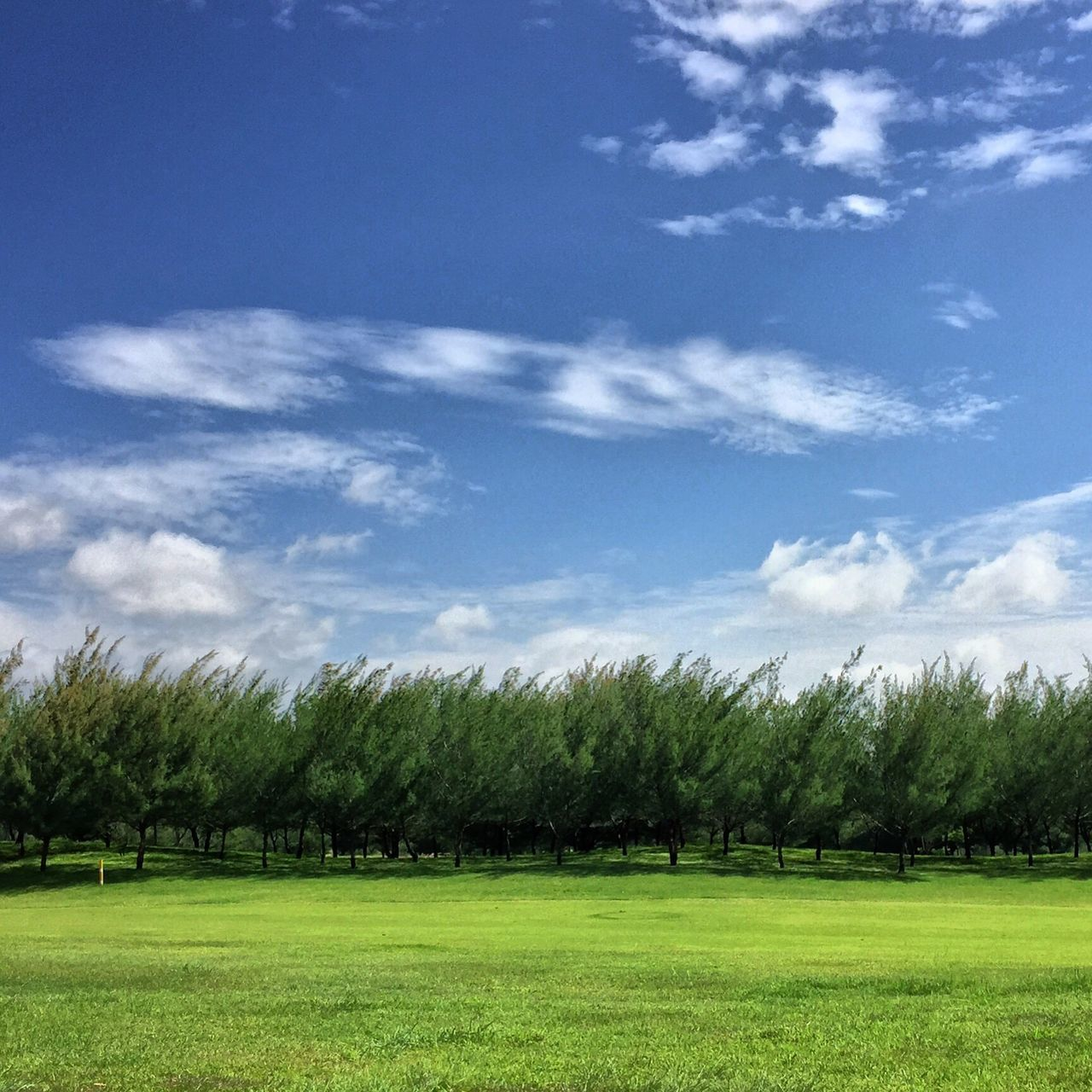 Landscape_Collection Greenery EyeEm Nature Lover EyeEm Best Shots Treescollection Treescape Treeskycloud