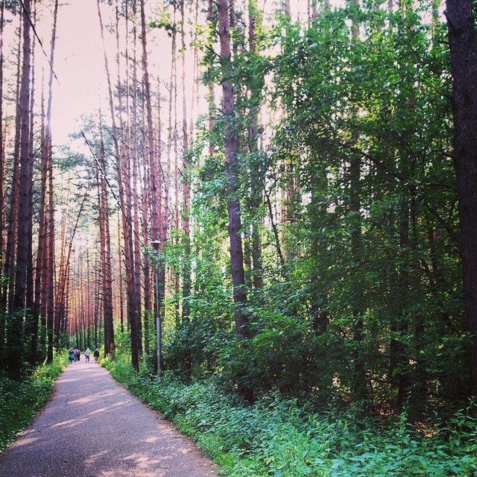 Лес тропаздоровья Нефтекамск прогулка Природа Nature Forest Дорога вечер