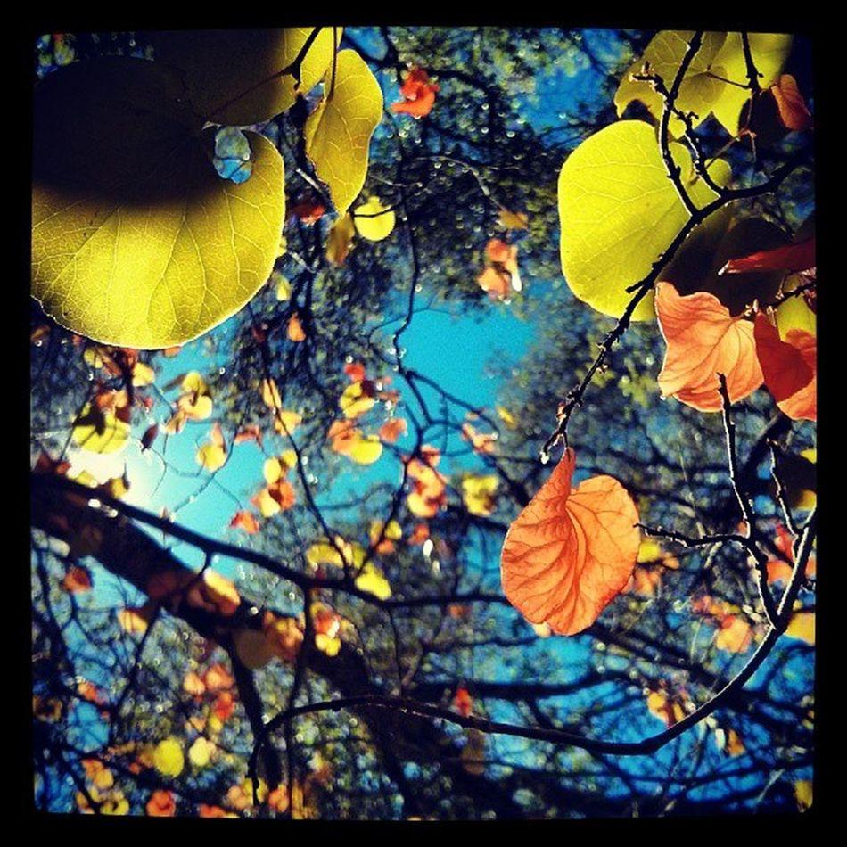 Fall Colors . Lakeberryessa Putahcreek California Seasonal Seasons TheGreatOutdoors Hiking Beautiful Instacolor Instagood Leaves Leaf Tree Change Natute