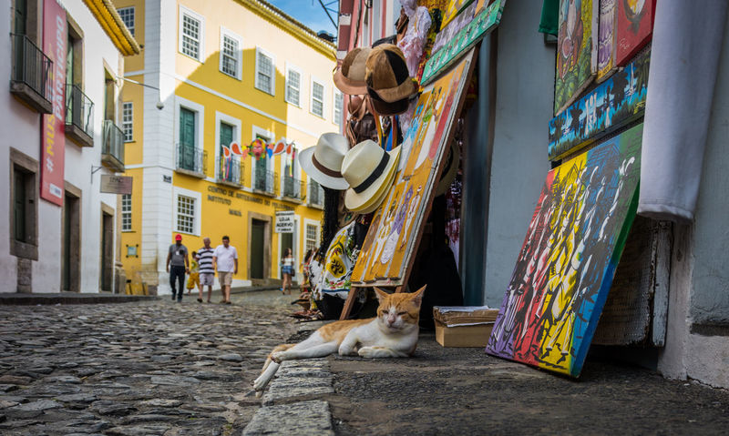Brasil Cat Cityu Girl Hat Pelourinho Salvador Bahia Street Photography
