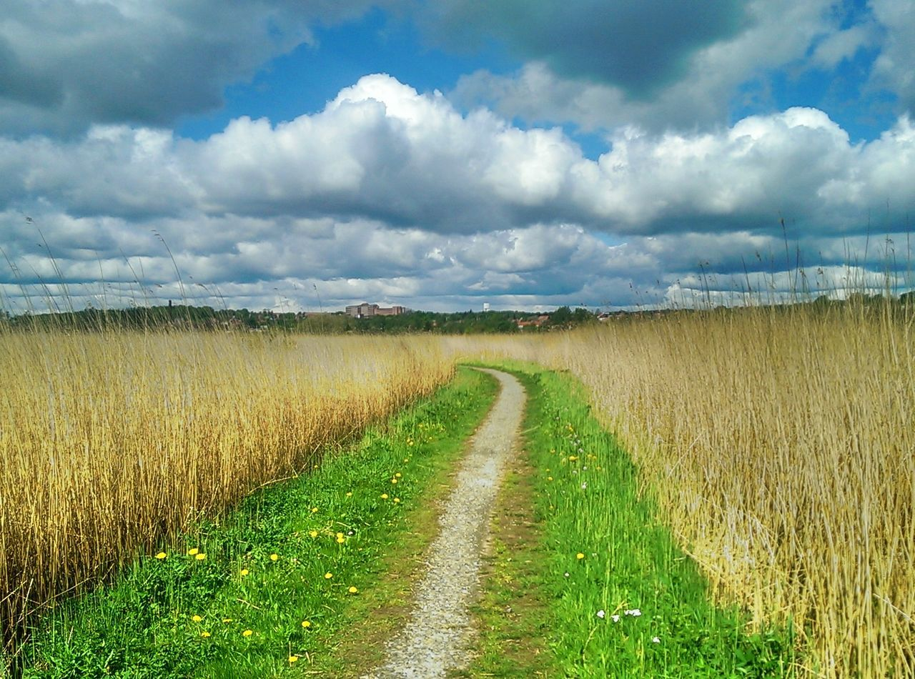 field, grass, tranquil scene, landscape, tranquility, agriculture, cloud - sky, nature, scenics, beauty in nature, sky, rural scene, growth, crop, cultivated land, day, the way forward, outdoors, no people, green color, cereal plant, plant