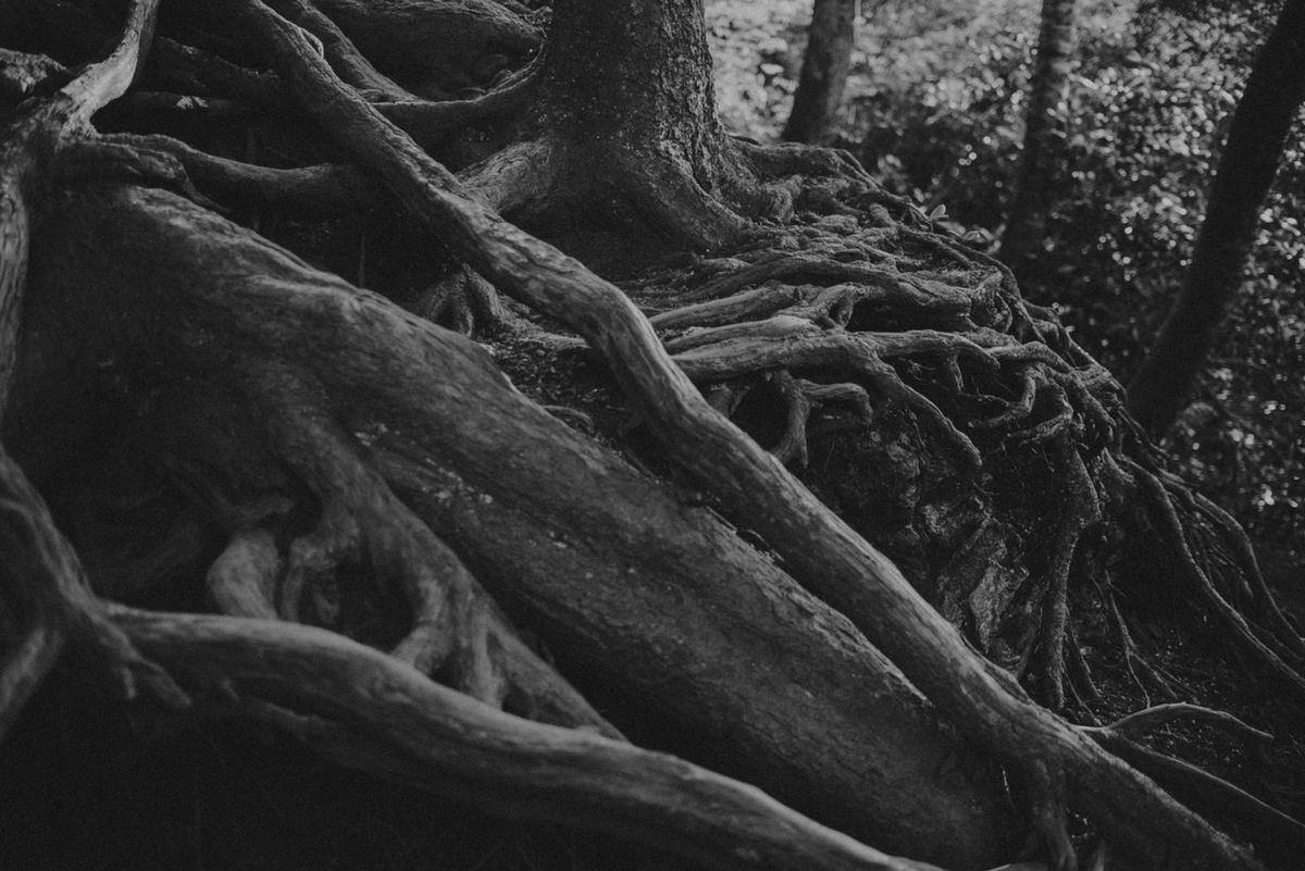 Great Smokey Mountains Tennessee Tree Roots Nature Outdoors B&w Black And White Desktop