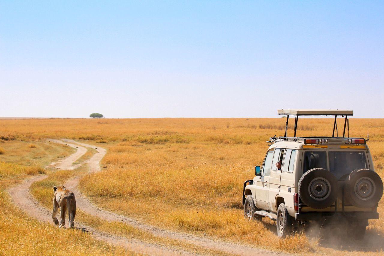 Beautiful stock photos of löwe, transportation, mode of transport, land vehicle, rural scene