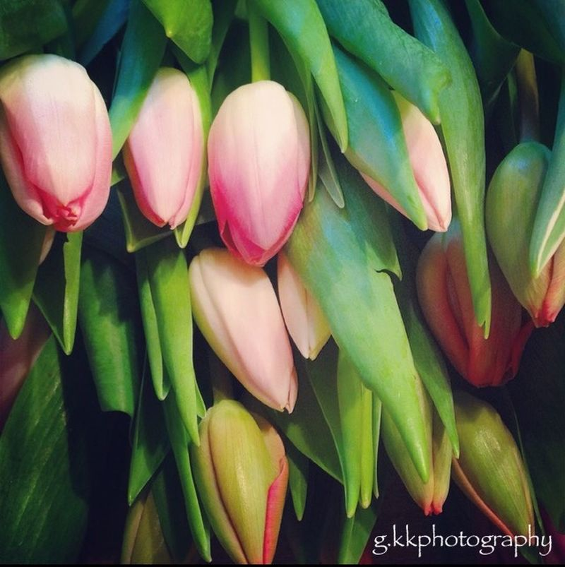 Spring Flowers Colorful Photography The First Fower Lovely Eye Em Nature Lover Colors Pastel Flower