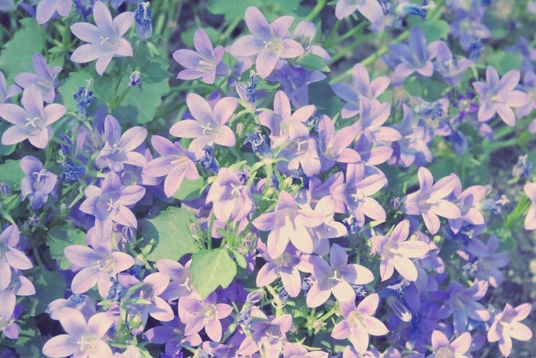 Purple Flower Flower Beautiful Purple Pretty Pretty Flower Purple Plant Plant