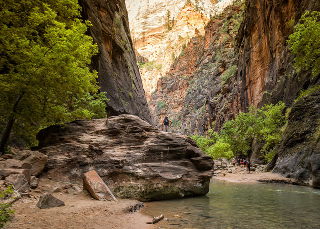 Beauty In Nature Cliff Geology Green Color Idyllic Nature Non Urban Scene Outdoors Rock Rock - Object Rock Formation Rocky Mountains Scenics The Narrows Tourism Tranquil Scene Tranquility Travel Destinations Tree Utah Water Zion National Park