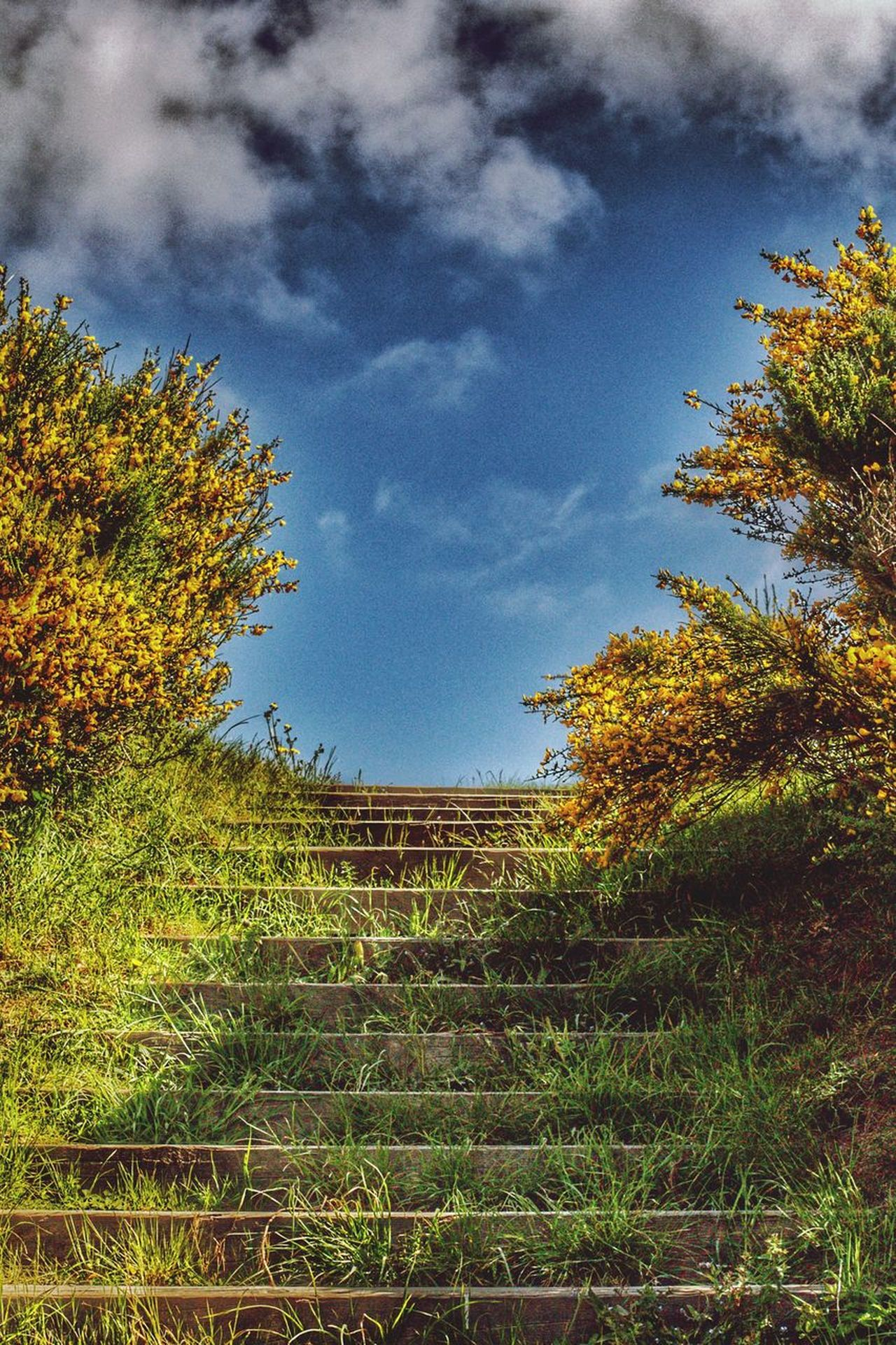Stairs into the heaven Tree Sky Cloud - Sky Growth Nature Day Autumn No People Outdoors Low Angle View Beauty In Nature Leaf Scenics Architecture Hdr_pics Hdrphotography Hdr Edit HDR Freshness Bristol 3XSPUnity Beauty In Nature