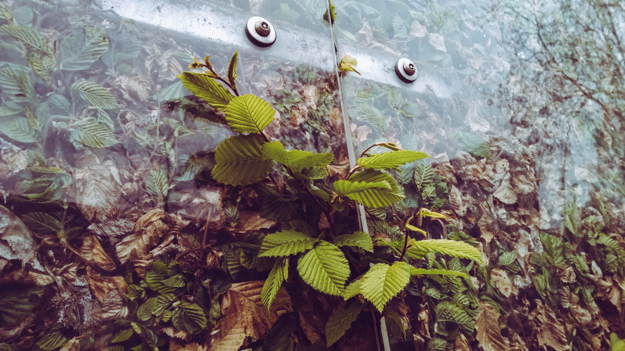 Art Nature Beauty In Nature City Life Close-up Day Eyes Fence Fragility Freshness Green Color Growth I See Faces Leaf Metal Sculpture Nature No People Outdoors Plant Plastic Point Of View