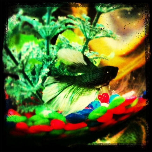 Fishy Mas Named Kawi(: