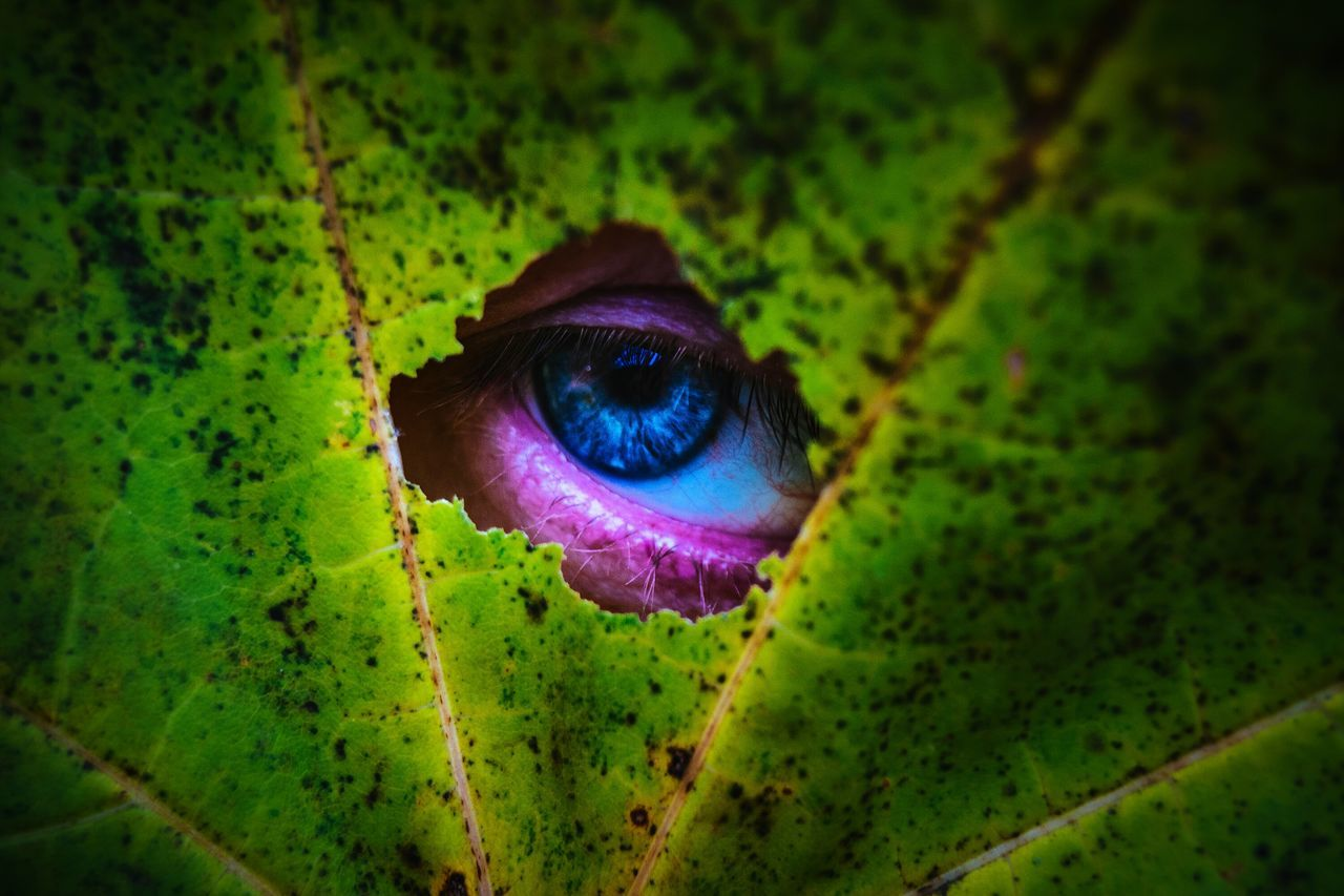 Selfie Eye Maximum Closeness Green Color Nature Close-up Beauty In Nature Eyesight Outdoors Eyeball Exceptional Photographs Our Best Pics By Ivan Maximov Open Edit From My Point Of View Focus Object Backgrounds Eyeem Photo Hole Pry
