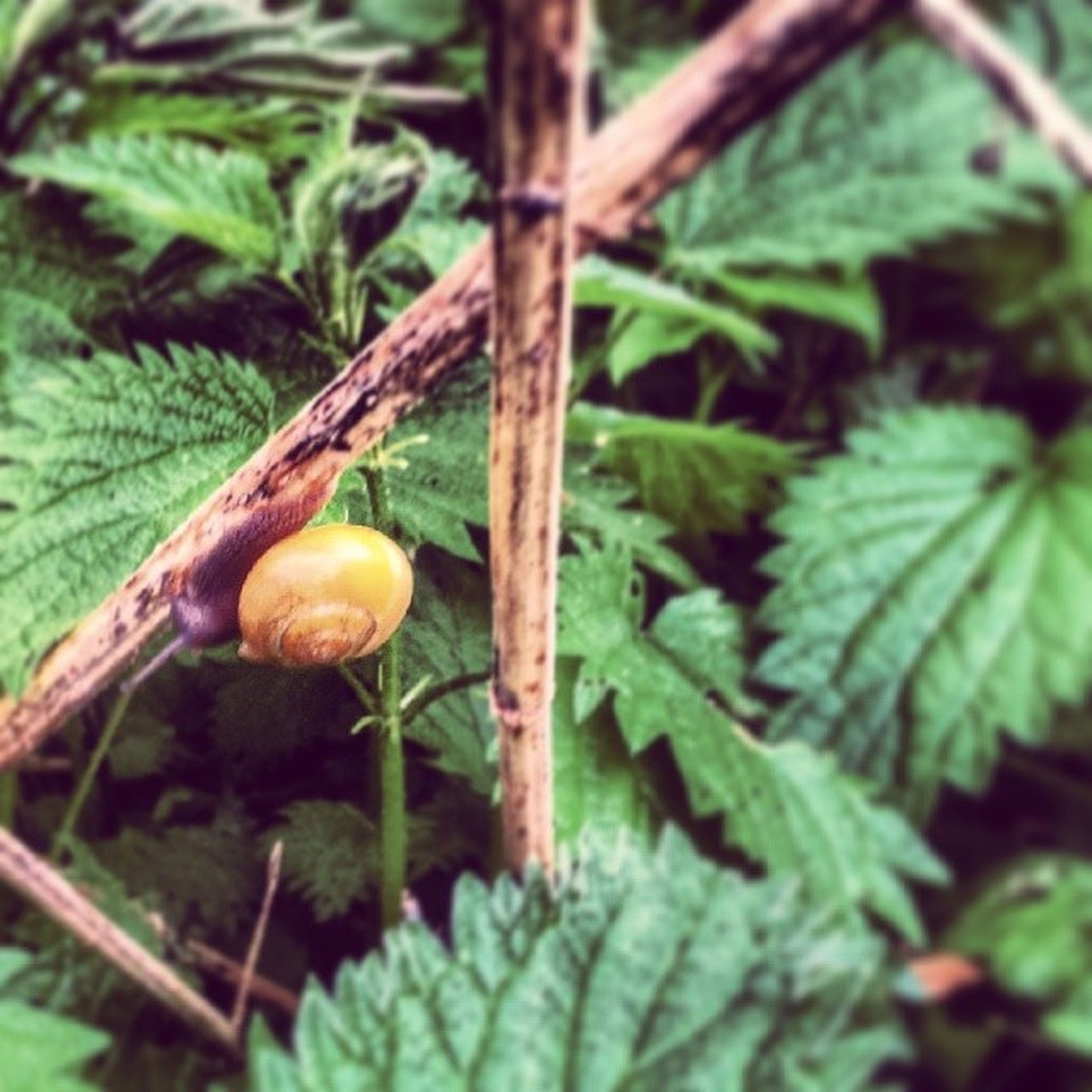 close-up, growth, leaf, green color, focus on foreground, nature, plant, mushroom, food and drink, fruit, freshness, fungus, growing, stem, selective focus, forest, day, no people, outdoors, food