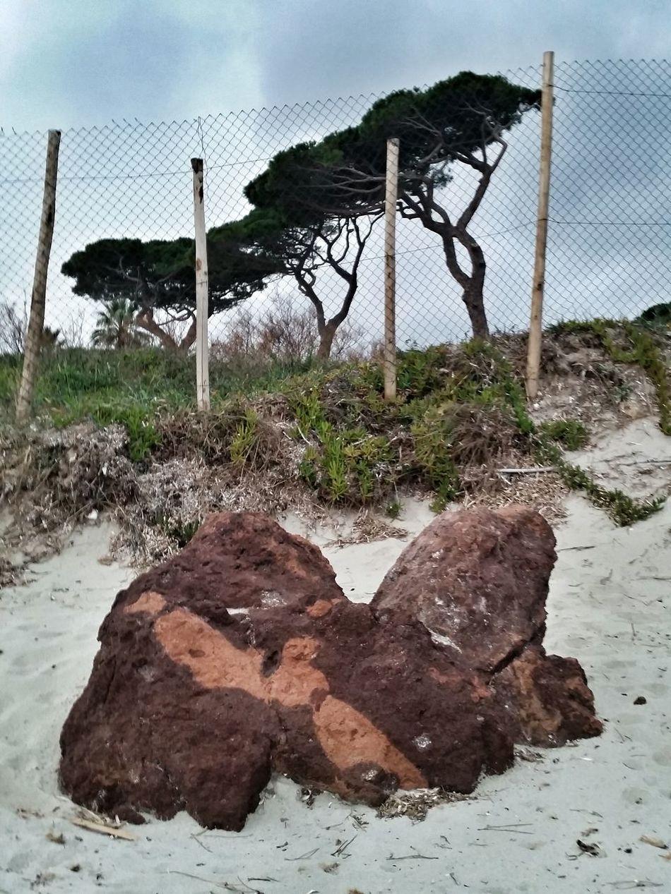 Saint Tropez Beach Sea Provence Pine Trees Pin Parasol Les Salins
