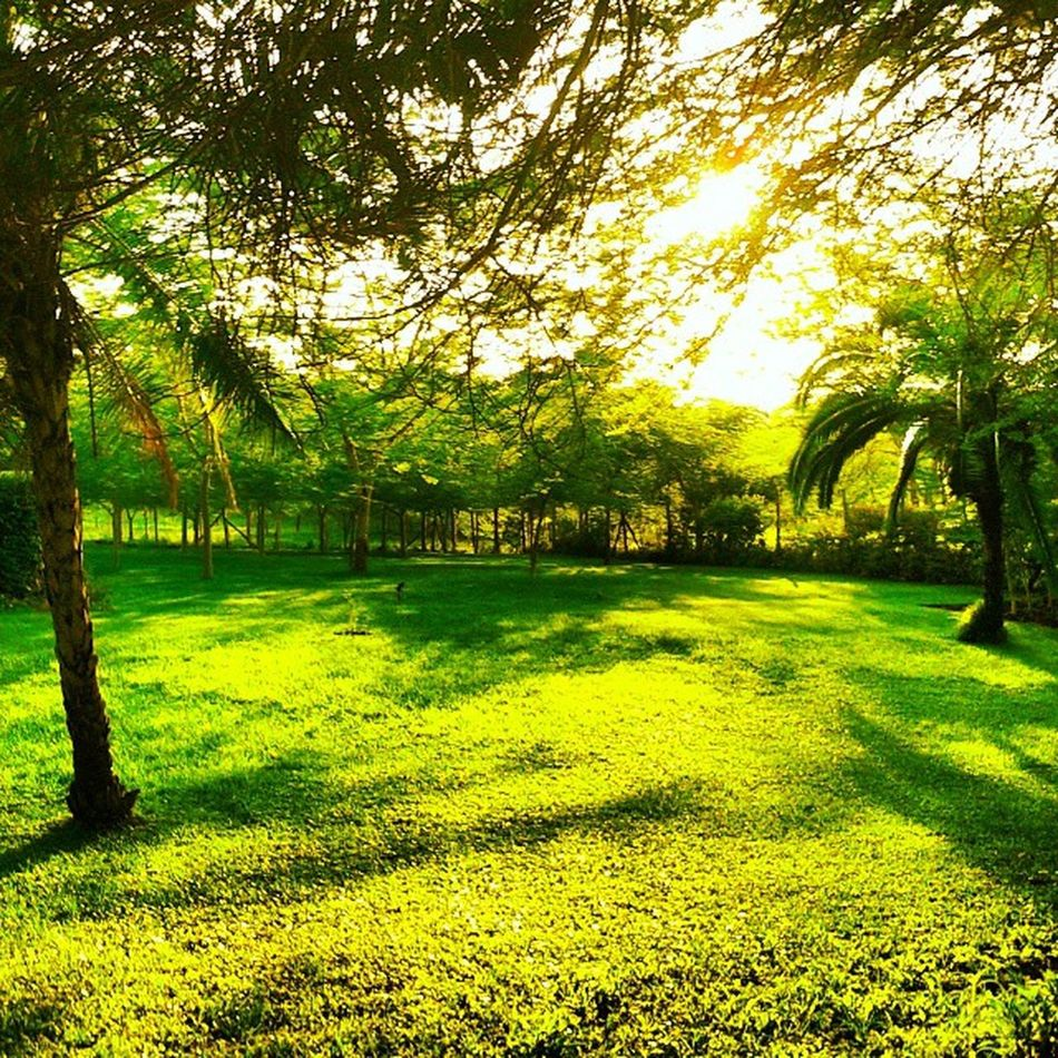 Early Morning Embu Sunrise home rural yellow green new hope