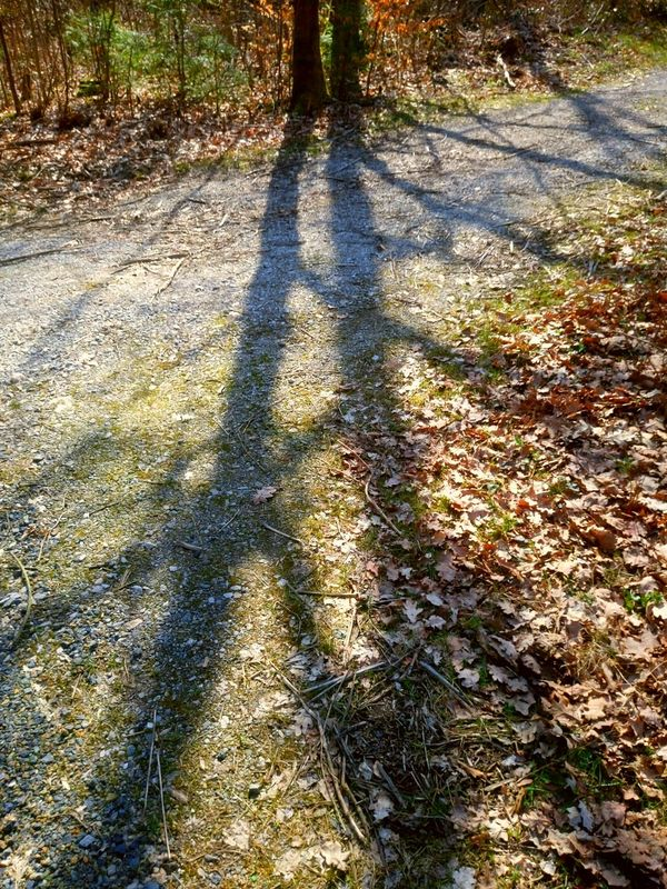 Schatten der Natur ... shadows of nature Shadow Sunlight Day Focus On Shadow High Angle View Outdoors Nature No People Tree Naturfotografie Nature Photography Wald Forest Forest Photography Outdoor Photography Schatten Fotografie Shadows Shadows Of Trees Shadow Photography EyeEm Nature Lover The Week On EyeEm Taking Photos EyeEmNewHere Beliebte Fotos