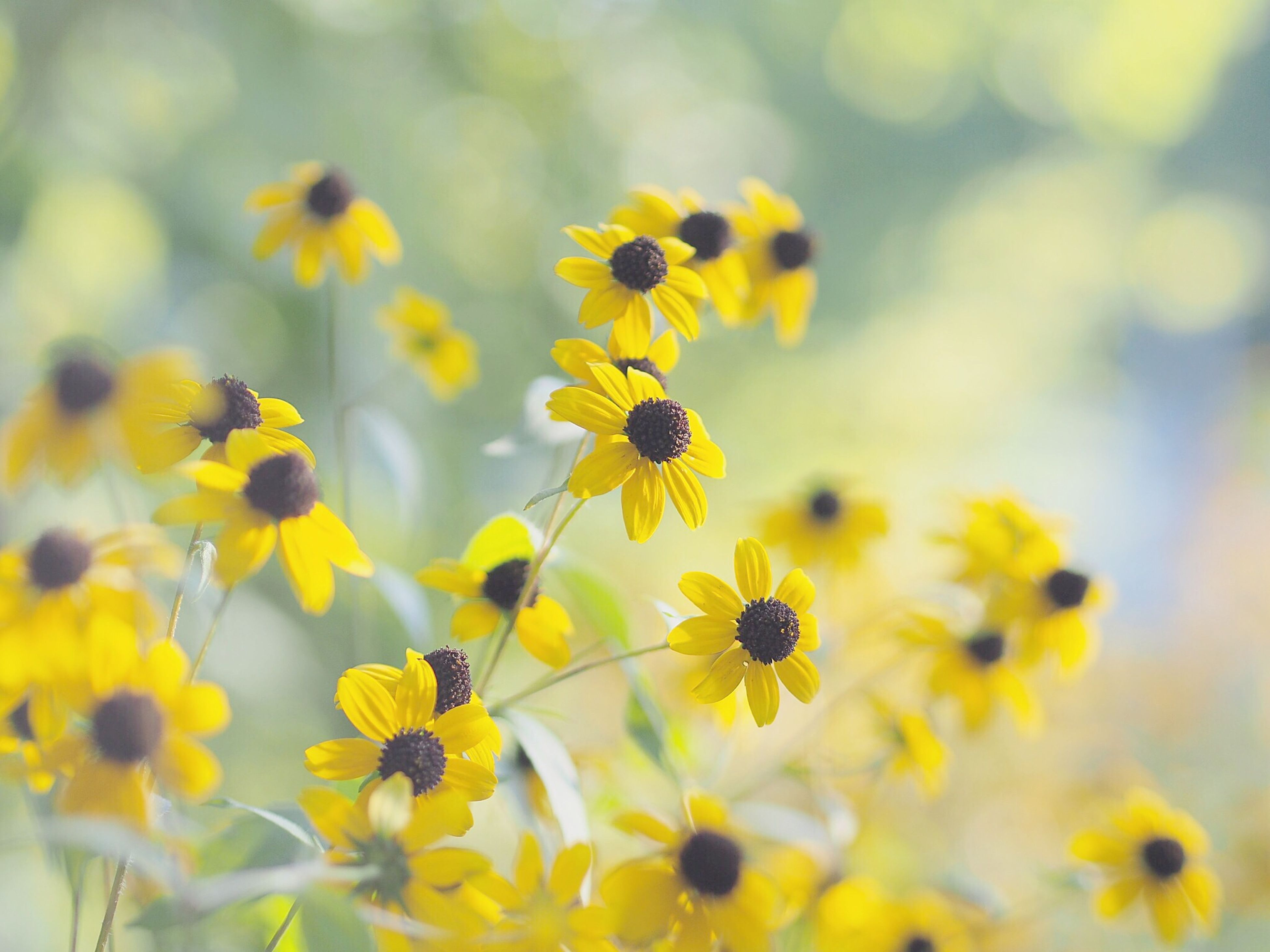 flower, yellow, freshness, growth, fragility, petal, insect, beauty in nature, focus on foreground, nature, plant, flower head, selective focus, close-up, blooming, animal themes, one animal, animals in the wild, in bloom, wildlife