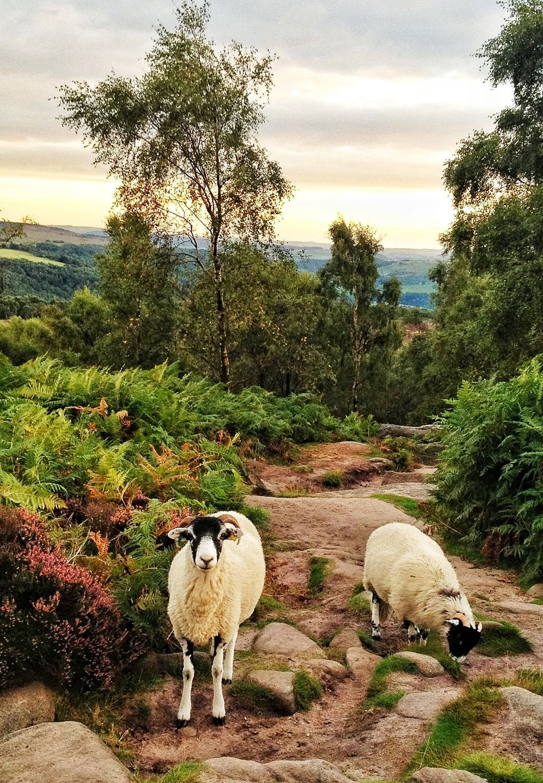 poser! Nature_collection Animals EyeEm Best Shots Landscape_Collection