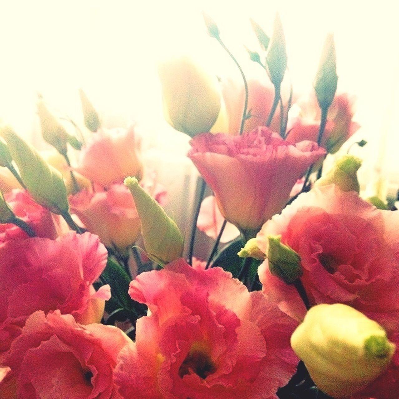Flowers At Home EyeEm Best Shots Lisianthus Eustoma Millennial Pink