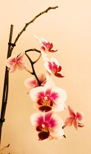 My favourite flower First Eyeem Photo