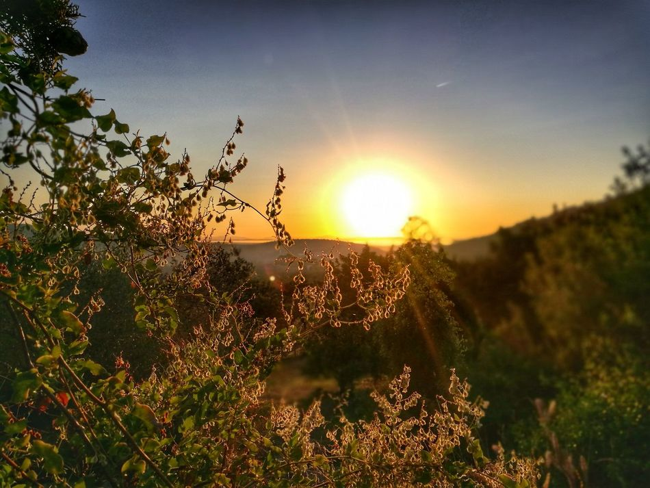 Sunset Nature Sun Beauty In Nature Tree Outdoors Sunlight Growth Sky No People Summer Grass Plant Silhouette Rural Scene Scenics Defocused Day Clear Sky Flower Mallorca Alaro Travel Holiday Tree