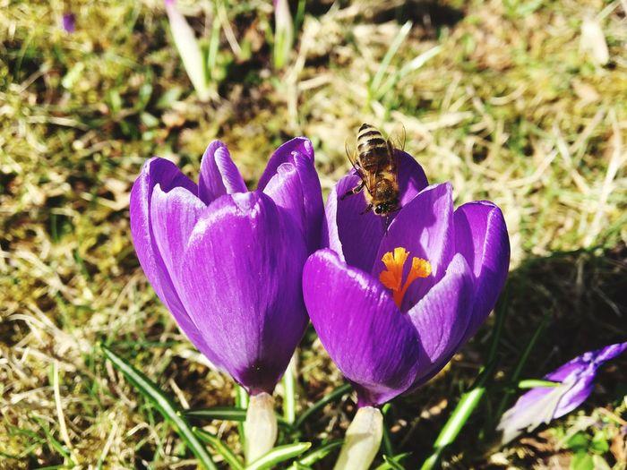 Sommer Flower