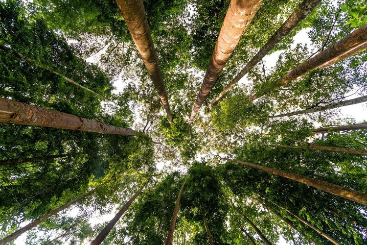 First Eyeem Photo Frim forest reserve Color Photography looking up lush greenery