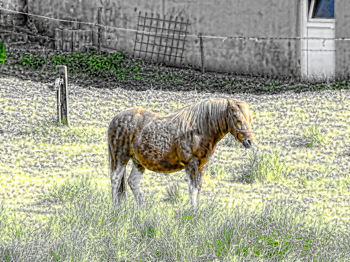 Animal Themes Beauty In Nature Field Grassy Grazing Hdrphotography Horse Landscape Natur Nature No People Outdoors Paard Pferd