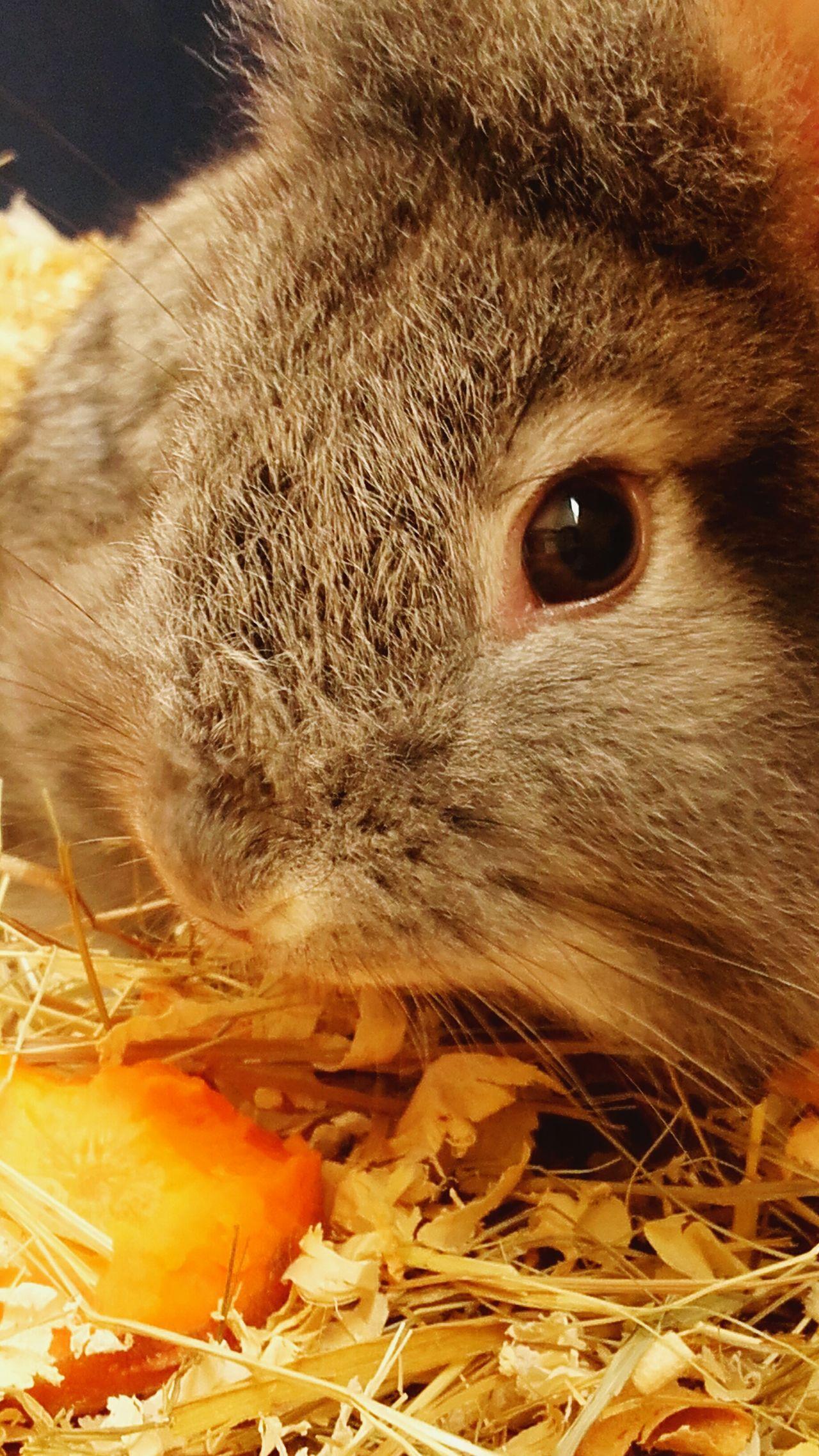 Rabbits 🐇 Rabbits Rabbit ❤️ Animals