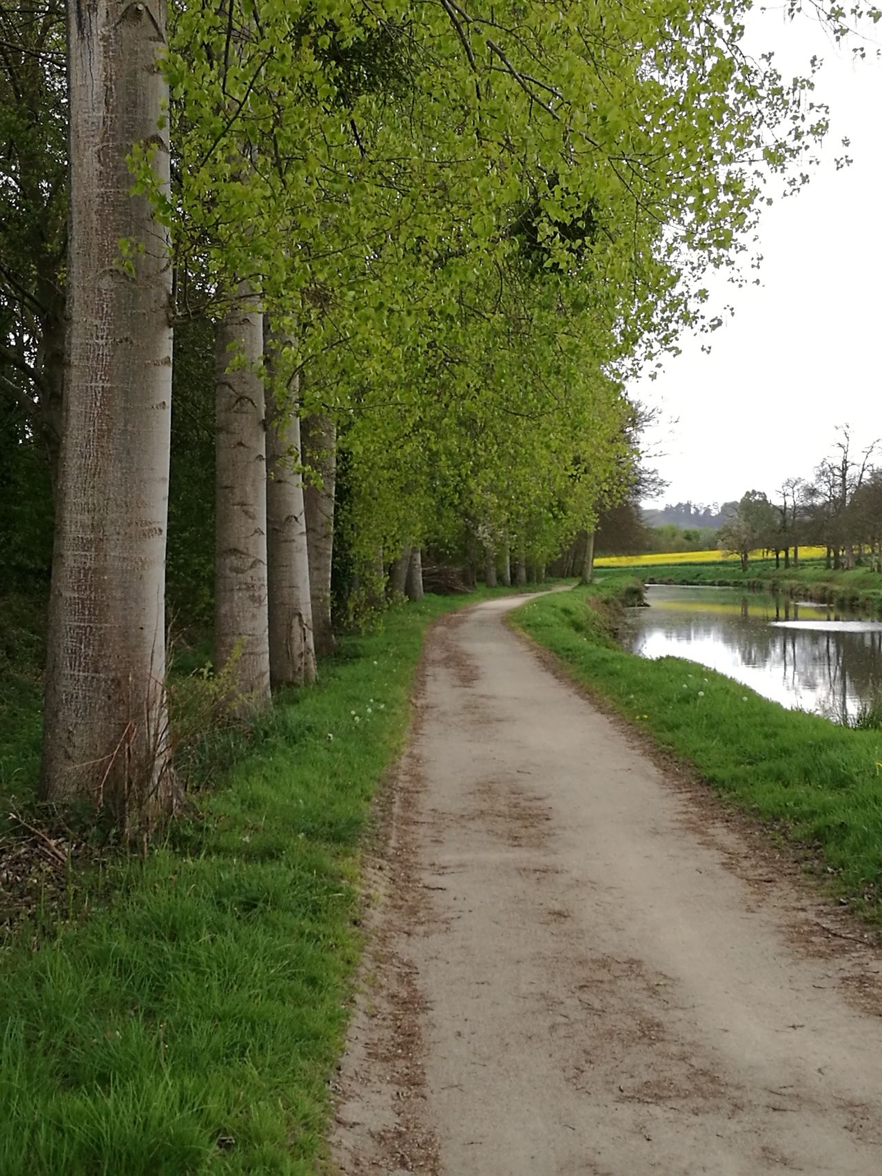 Beauty In Nature Grass Green Color Growth Landscape Nature Outdoors Path River Road Scenics Sky The Way Forward Tranquil Scene Tranquility Tree